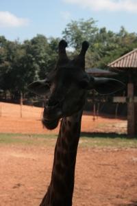 Hey der: Animals at Korat Zoo