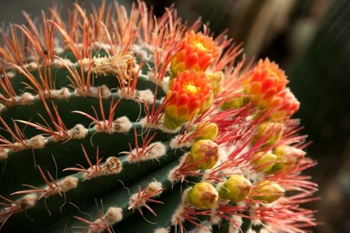 Cactus Contrast
